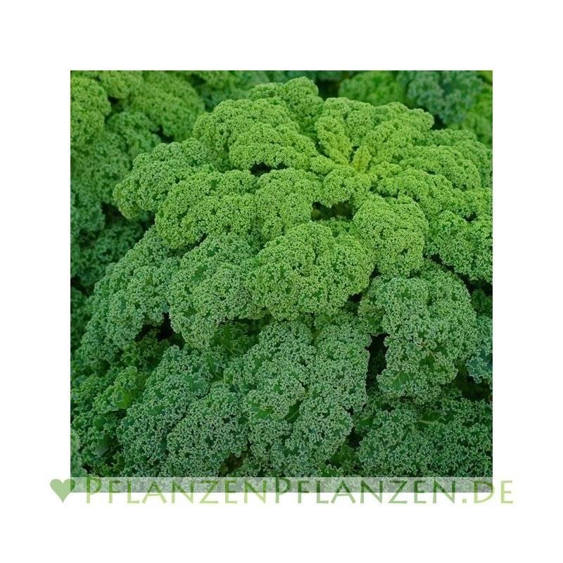 Pflanzen-Pflanzen