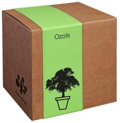 Koks kastē