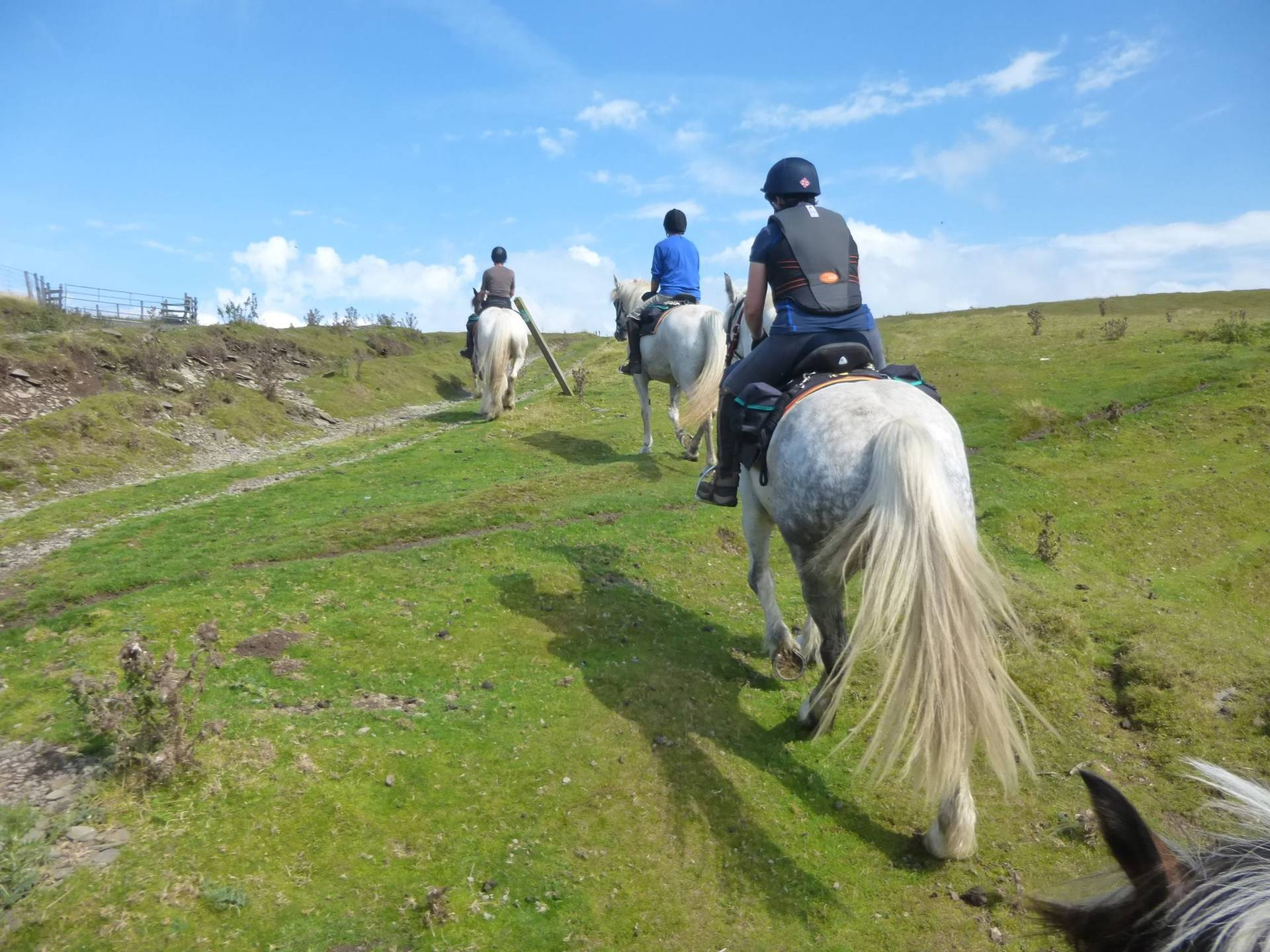 Freerein Riding Holidays
